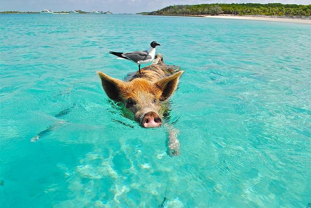 Karibské dobrodružstvo