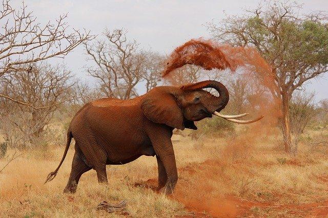 6 faktov o najväčších suchozemských živočíchoch